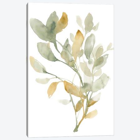 Sage & Sienna Leaves I Canvas Print #JGO1205} by Jennifer Goldberger Canvas Artwork