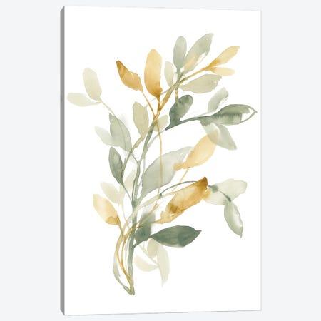 Sage & Sienna Leaves II Canvas Print #JGO1206} by Jennifer Goldberger Canvas Artwork