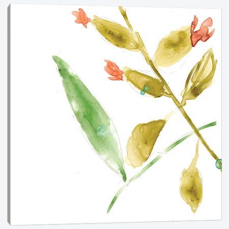 Tropical Display VIII Canvas Print #JGO352} by Jennifer Goldberger Art Print
