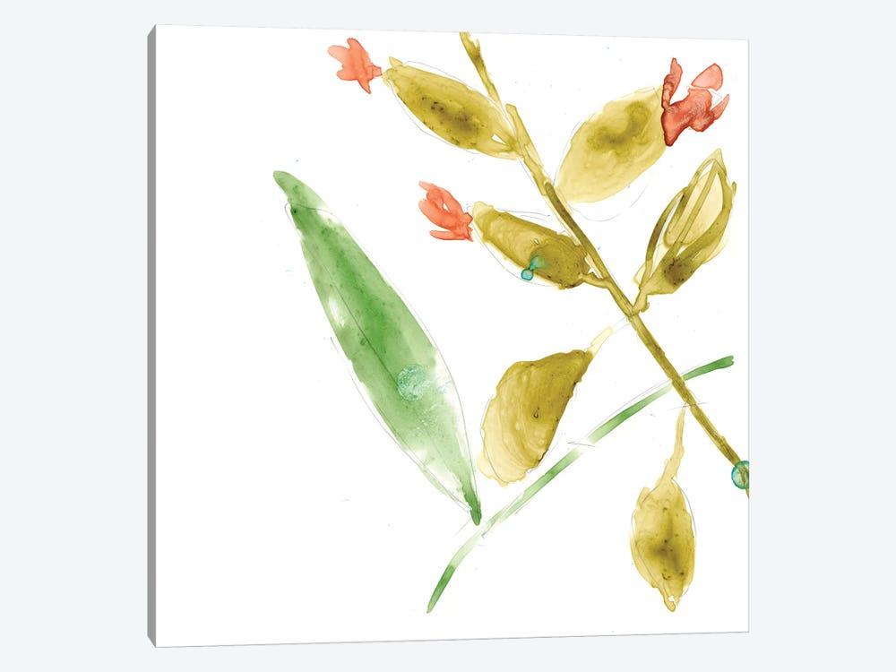 Tropical Display VIII by Jennifer Goldberger 1-piece Canvas Print