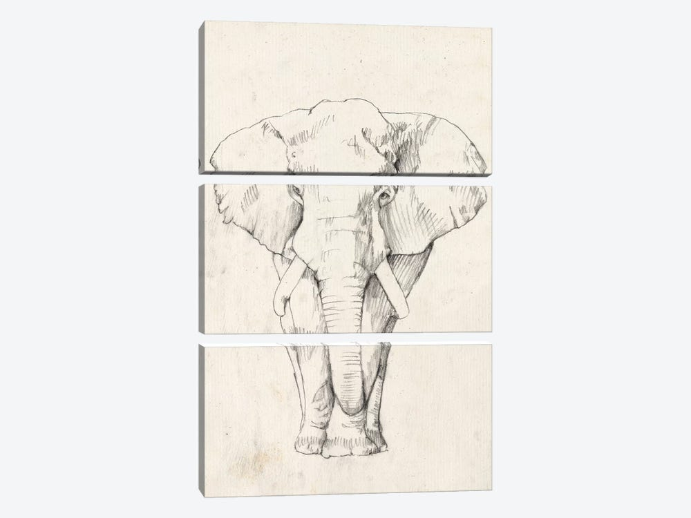 Elephant Portrait I by Jennifer Goldberger 3-piece Canvas Print