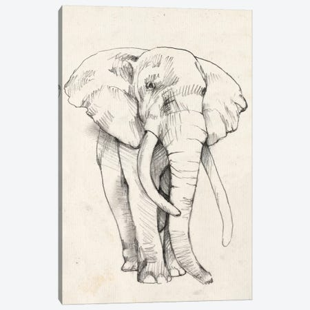 Elephant Portrait II Canvas Print #JGO373} by Jennifer Goldberger Canvas Print
