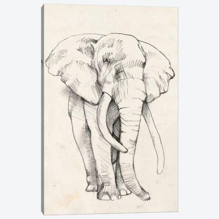 Elephant Portrait II Canvas Print #JGO373} by Jennifer Goldberger Canvas Print