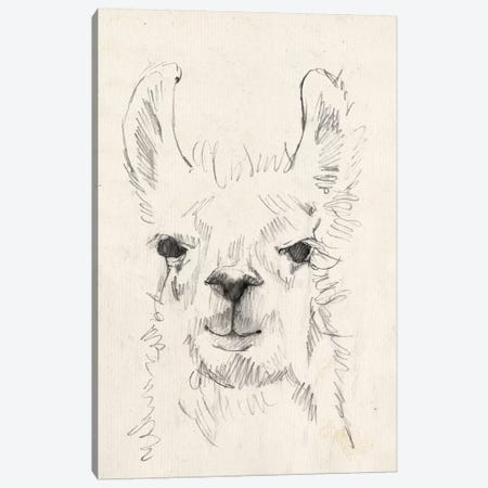 Llama Portrait I Canvas Print #JGO399} by Jennifer Goldberger Canvas Print