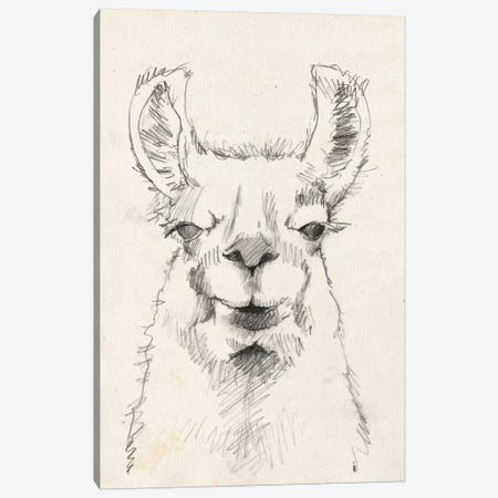 Llama Portrait II Canvas Print #JGO400} by Jennifer Goldberger Art Print