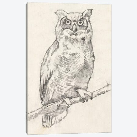 Owl Portrait I Canvas Print #JGO416} by Jennifer Goldberger Canvas Art Print
