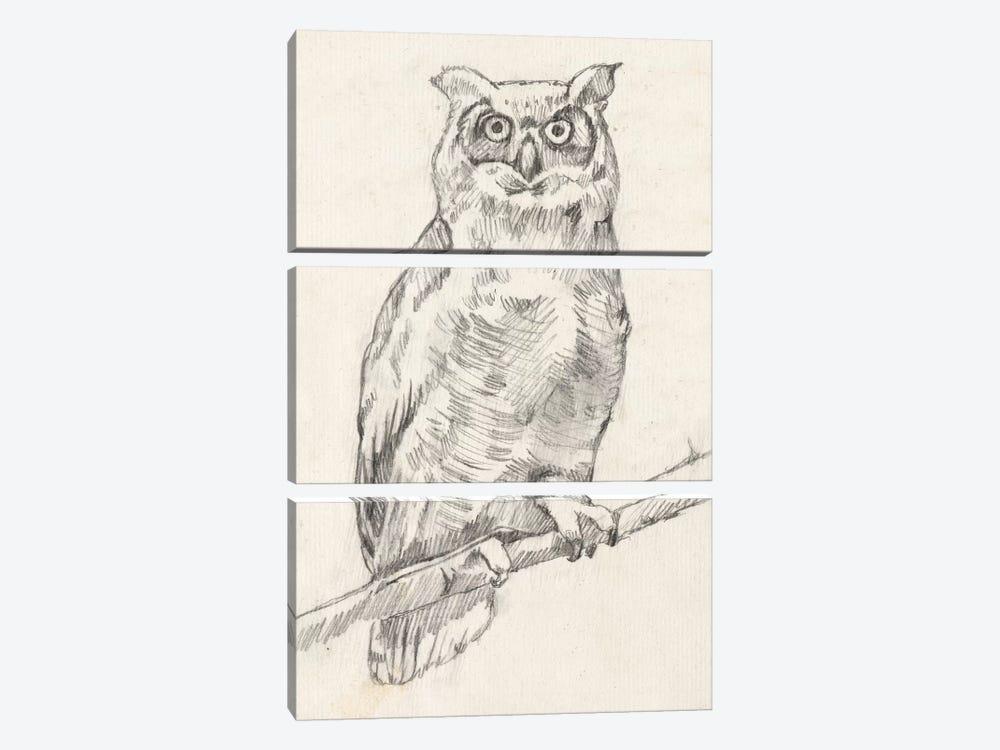 Owl Portrait I by Jennifer Goldberger 3-piece Canvas Art