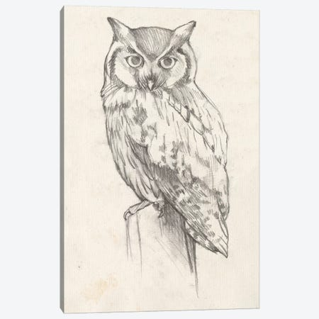Owl Portrait II Canvas Print #JGO417} by Jennifer Goldberger Canvas Print