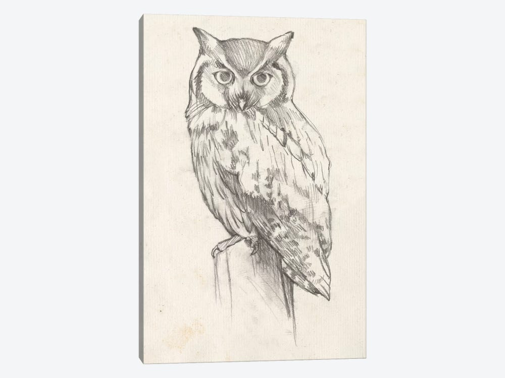 Owl Portrait II by Jennifer Goldberger 1-piece Canvas Print