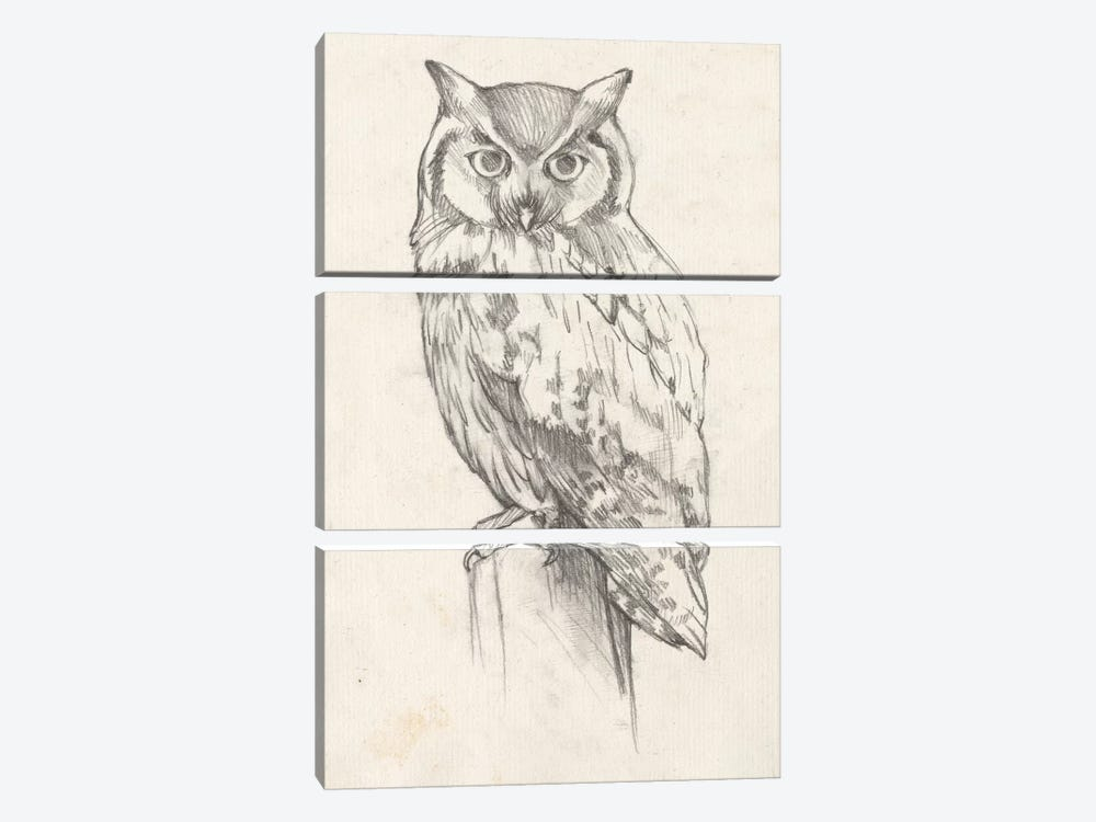 Owl Portrait II by Jennifer Goldberger 3-piece Art Print