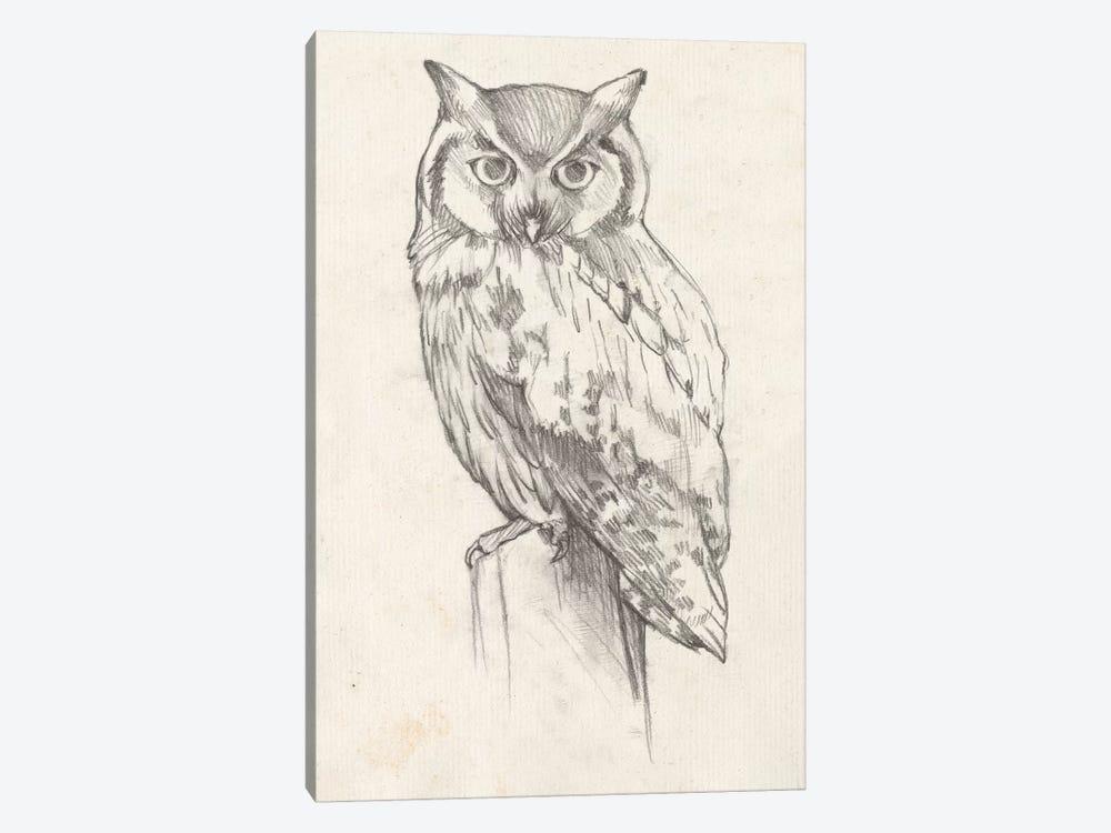 Owl Portrait II by Jennifer Goldberger 1-piece Canvas Print