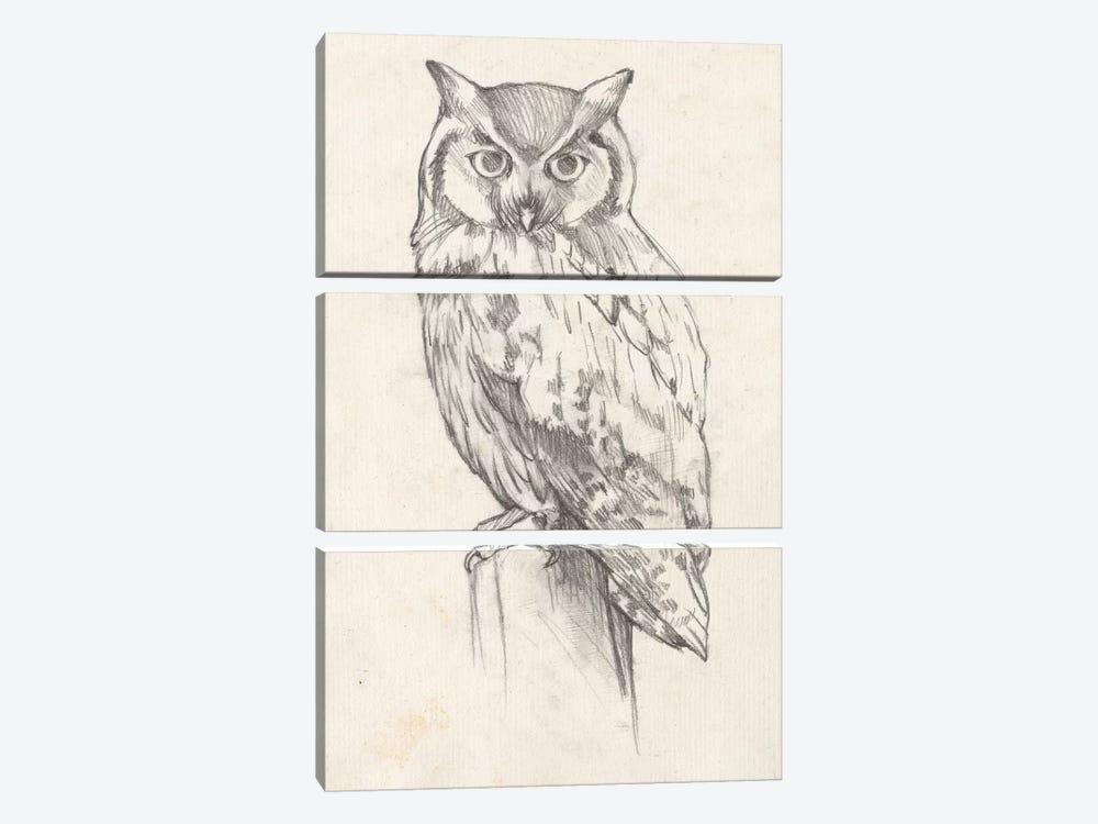 Owl Portrait II by Jennifer Goldberger 3-piece Art Print