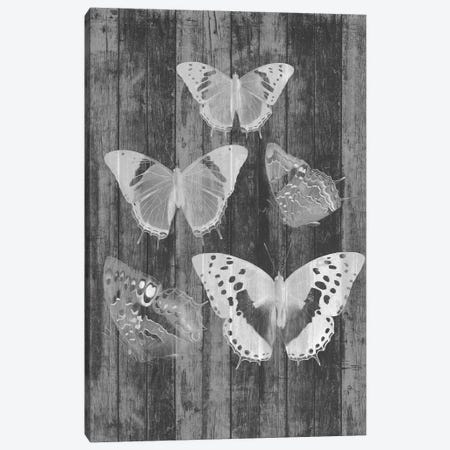 Rustic Butterfly Chart II Canvas Print #JGO533} by Jennifer Goldberger Art Print