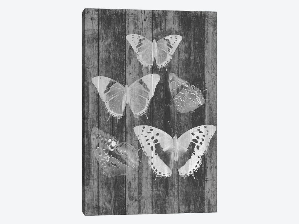 Rustic Butterfly Chart II by Jennifer Goldberger 1-piece Canvas Art