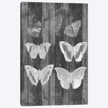 Rustic Butterfly Chart III Canvas Print #JGO534} by Jennifer Goldberger Canvas Artwork