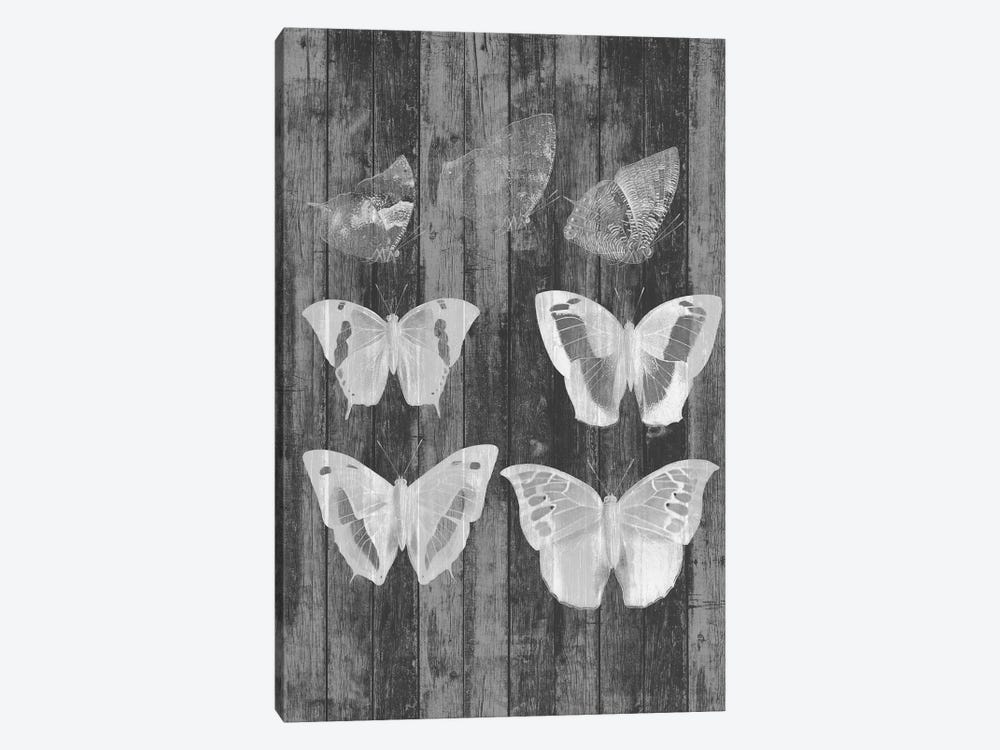 Rustic Butterfly Chart III by Jennifer Goldberger 1-piece Canvas Print