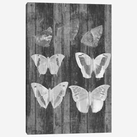 Rustic Butterfly Chart III Canvas Print #JGO534} by Jennifer Goldberger Canvas Artwork