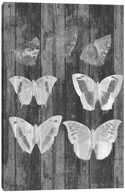 Rustic Butterfly Chart III Canvas Art Print