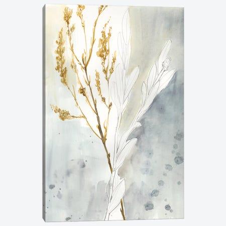 Wild Grass II Canvas Print #JGO568} by Jennifer Goldberger Canvas Art