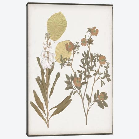 Book-Pressed Flowers I Canvas Print #JGO576} by Jennifer Goldberger Canvas Art