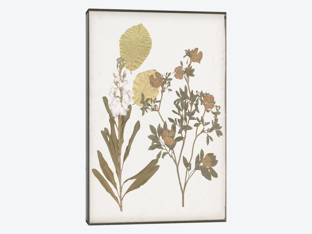 Book-Pressed Flowers I by Jennifer Goldberger 1-piece Canvas Print