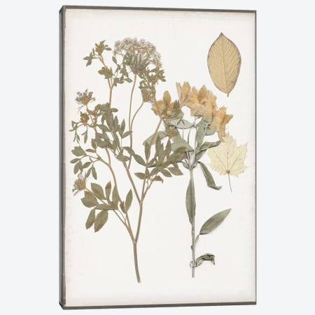 Book-Pressed Flowers II Canvas Print #JGO577} by Jennifer Goldberger Canvas Art