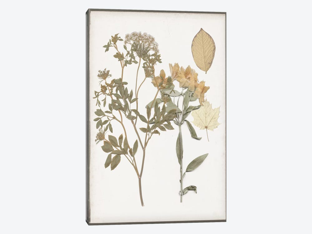 Book-Pressed Flowers II by Jennifer Goldberger 1-piece Canvas Wall Art