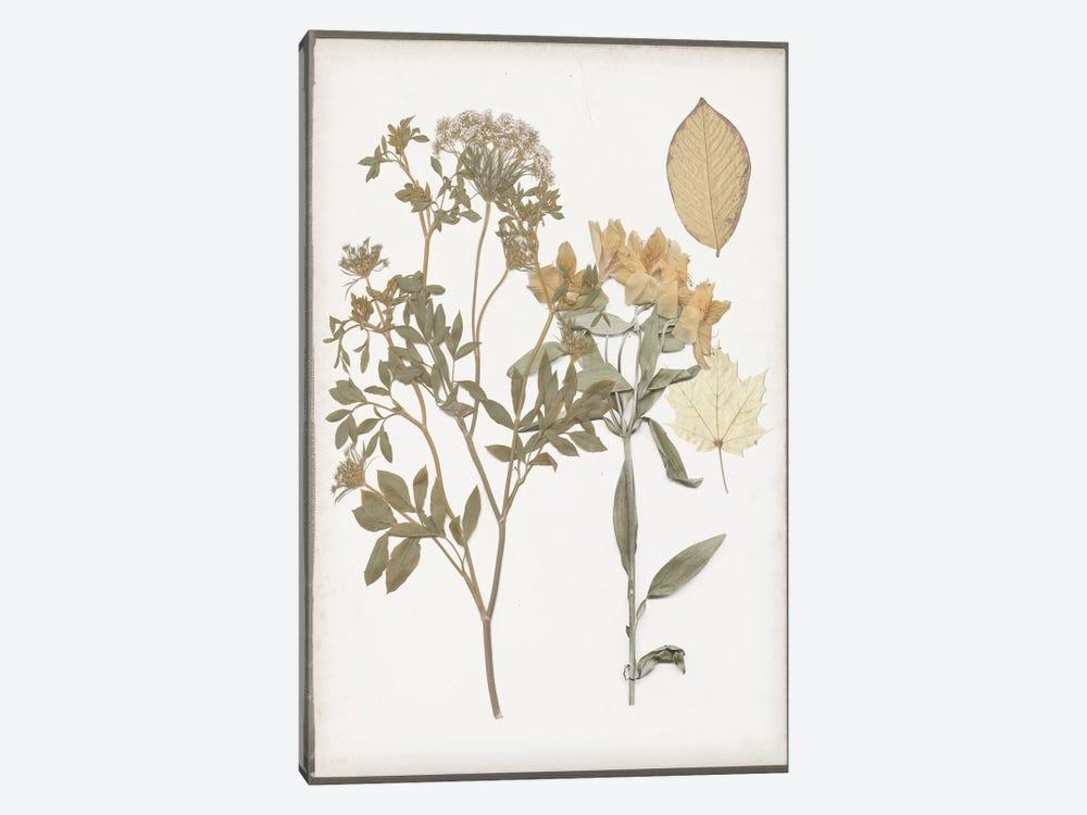 Book-Pressed Flowers II by Jennifer Goldberger 1-piece Canvas Wall Art