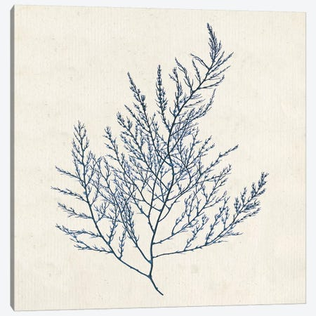 Indigo Algae I Canvas Print #JGO588} by Jennifer Goldberger Canvas Art