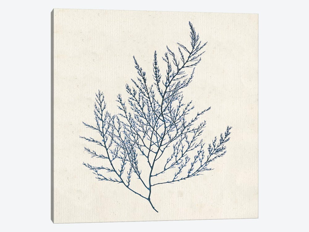 Indigo Algae I by Jennifer Goldberger 1-piece Canvas Art