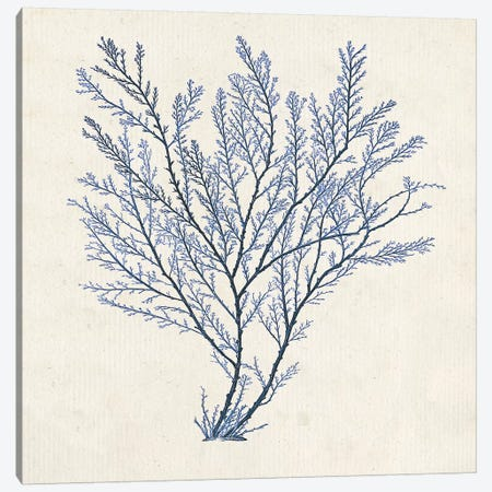 Indigo Algae II Canvas Print #JGO589} by Jennifer Goldberger Canvas Wall Art