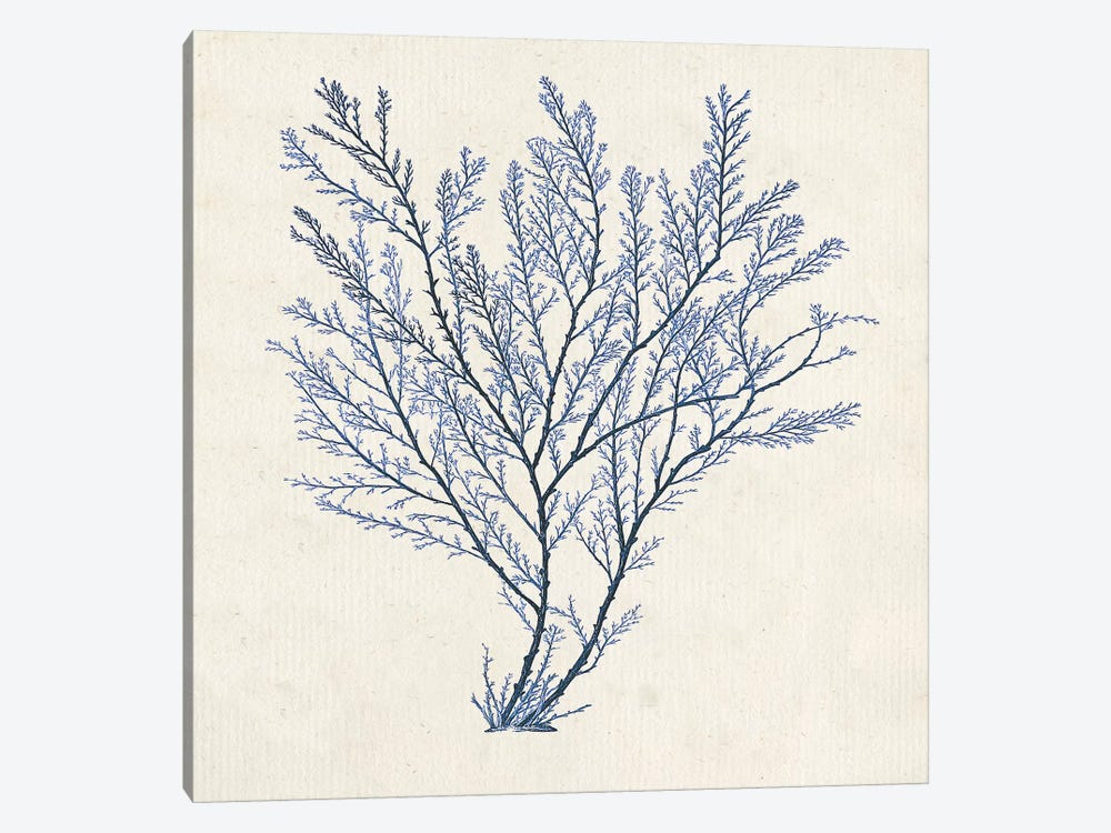 Indigo Algae II by Jennifer Goldberger 1-piece Canvas Print