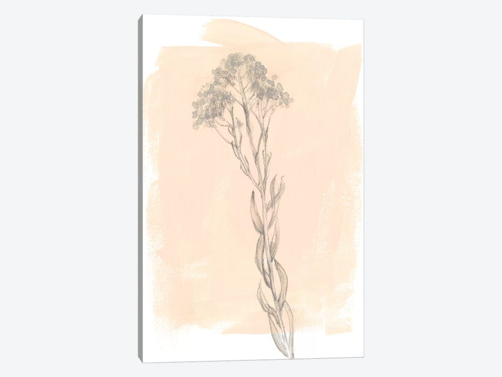 Branch On Blush I by Jennifer Goldberger 1-piece Canvas Art