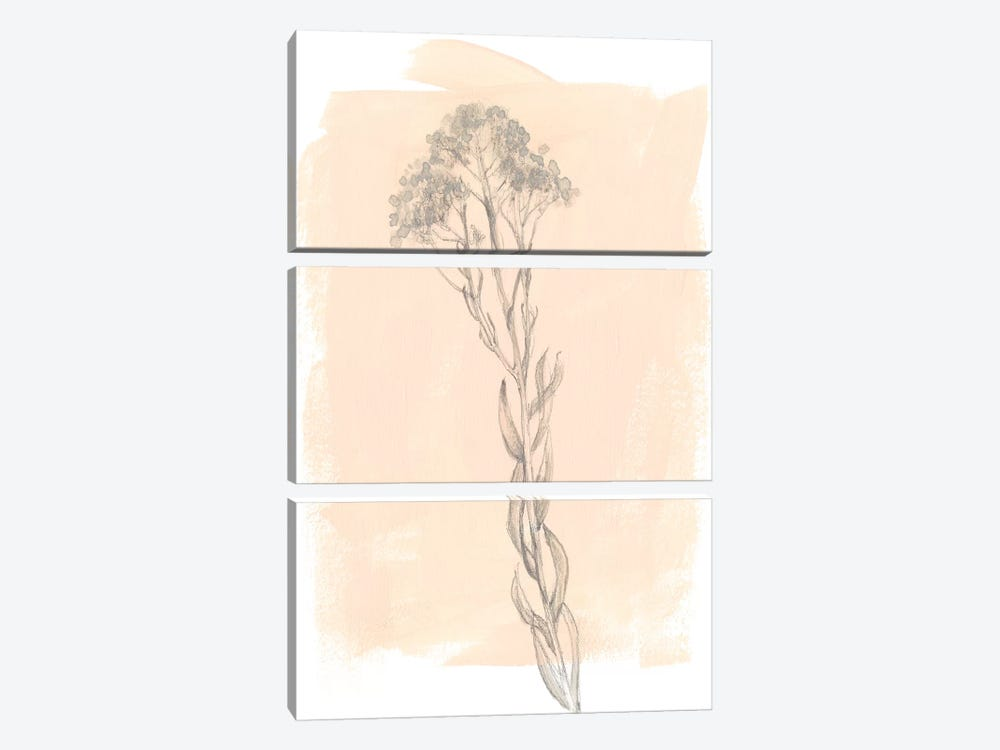 Branch On Blush I by Jennifer Goldberger 3-piece Canvas Wall Art