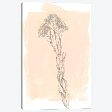 Branch On Blush I Canvas Print #JGO644} by Jennifer Goldberger Canvas Art