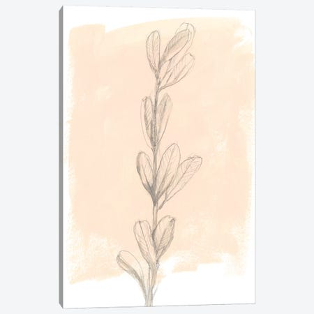 Branch On Blush II Canvas Print #JGO645} by Jennifer Goldberger Canvas Art