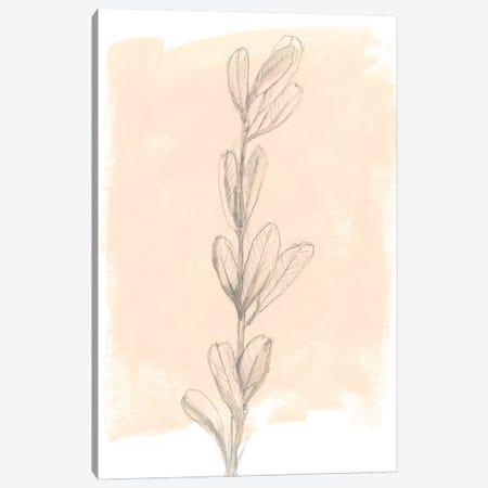 Branch On Blush II Canvas Print #JGO645} by Jennifer Goldberger Canvas Art
