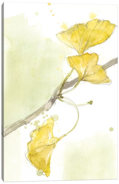 Ginkgo II Canvas Art Print