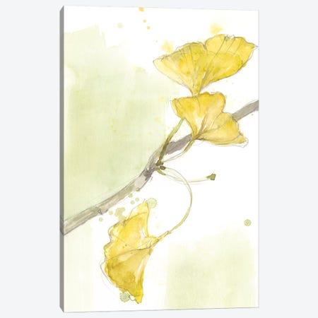 Ginkgo II Canvas Print #JGO662} by Jennifer Goldberger Art Print