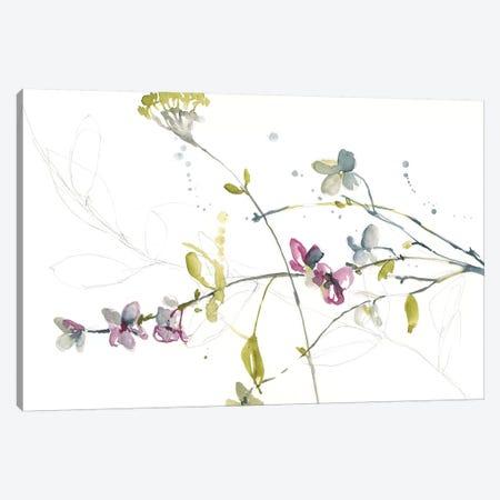 Branches & Blossoms II Canvas Print #JGO729} by Jennifer Goldberger Canvas Artwork