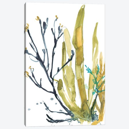 Reef Illusion I Canvas Print #JGO783} by Jennifer Goldberger Canvas Art