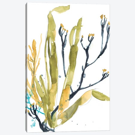 Reef Illusion II 3-Piece Canvas #JGO784} by Jennifer Goldberger Canvas Art Print