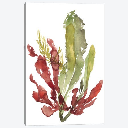 Seaweed Garden II Canvas Print #JGO788} by Jennifer Goldberger Canvas Art