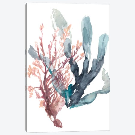 Sweet Seaweed I Canvas Print #JGO837} by Jennifer Goldberger Canvas Print