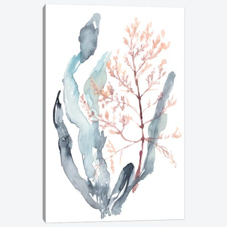Sweet Seaweed II Canvas Print #JGO838} by Jennifer Goldberger Canvas Art