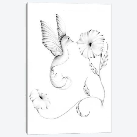 Hummingbird I Canvas Print #JHB25} by Joanna Haber Canvas Wall Art