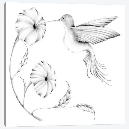 Hummmingbird II Canvas Print #JHB26} by Joanna Haber Canvas Wall Art