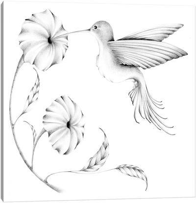 Hummmingbird II Canvas Art Print