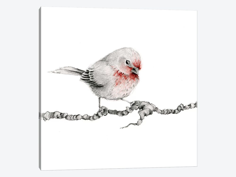 Little Red Finch by Joanna Haber 1-piece Canvas Print