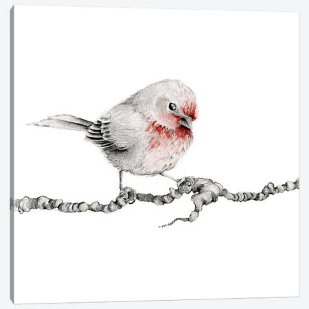 Little Red Finch Canvas Print #JHB42} by Joanna Haber Canvas Print